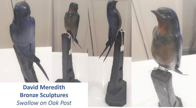 Bronze Swallow